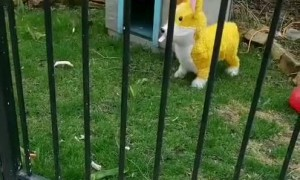 Dog Perplexed by Piñata