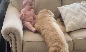 Golden Retriever Gives Glorious Cuddles