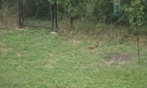 Spinning Bird Feeder Sends Squirrel Flying