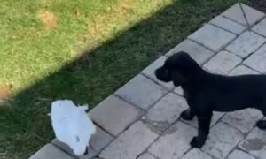 Cockatoo and Puppy Play