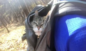 20-Year-Old Cat Gets to go Hiking