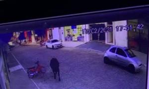 Bull Barrels Man Over on Brazilian Street