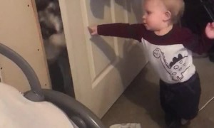 Dog Gives Baby Push with Door