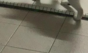 Cat Has a Playful Game of Chase with Mouse