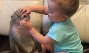 Monkey and Baby Are Best Buds
