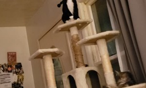 Cat on Top of Tree Has Sneezing Fit