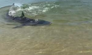 Shark on Shore in Sydney