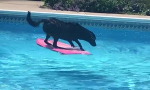 Labrador Dog Uses Wakeboard To Fetch Ball From Pool