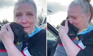 Mom Surprised With Puppy After Losing Labrador