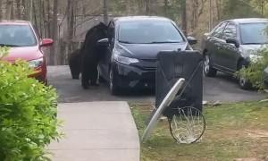 Bear Climbs Into Backseat of Car