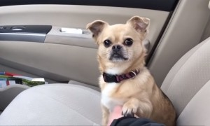 Dog's Hilarious Tactic To Not Allow Owner To Drive Away