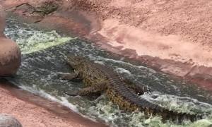 Roller Coaster for Croc