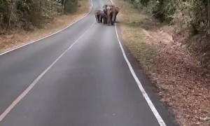 Herd of Elephants Walking Down Empty Road