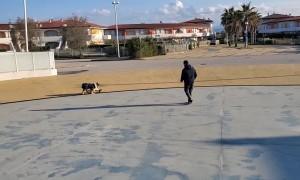 Dog Shows Off Balance Skills on Skateboard