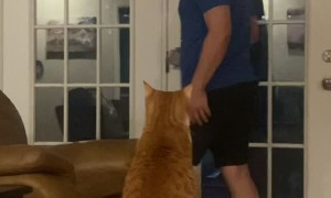 Feisty Cat Gets Handsy