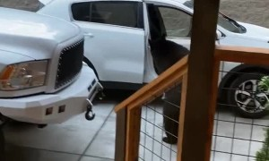 Curious Bear Scared Away From Unlocked Car