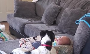Oreo's Howls Help Comfort Baby