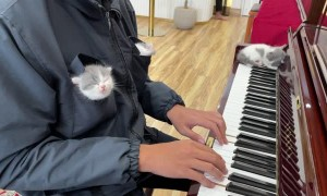 Kittens Listening to Piano Music Fall Asleep