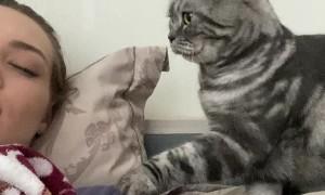 Gentle Kitty Tries to Wake Its Human