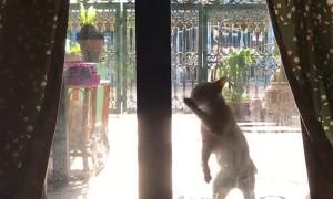 Stray Cat Scratches at Door