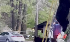 Bear Family Comes Out of Tree