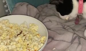 Kitty Snatches Herself a Popcorn Snack