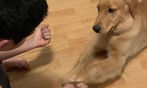 Eager Puppy Gets Totally Fooled By Magic Trick