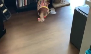 Cat Runs into Tub and Slides into Bookshelf