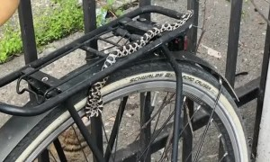 Snake Spotted Slithering Across Parked Bicycle