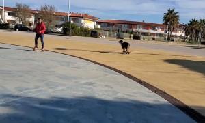 Dude and Dog Skate Together