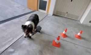 Doggy Puts Incredible Skateboard Skills on Display