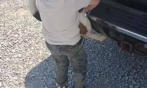 Boy Boosts Basset Hound into Truck