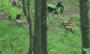Family of Bears Find a Swing to Play On