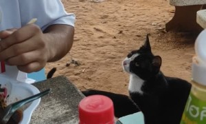 Stray Cat Politely Asks for Food
