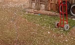 Massive Hail Falls in Roscoe Texas