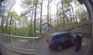 Two Bears Raid Car for the Snacks
