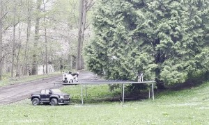 Tribe of Baby Goats Play Together on a Trampoline