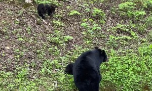 Mama Bear Showing Her Cubs the Smokey Mountains