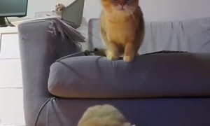 Cats sync their dance moves for the camera