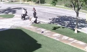 Distracted Dog Drags Woman off Her Feet