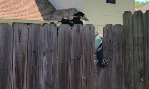 Sweater-Wearing Doggy Is a Skilled Climber