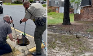 Brave officers rescue nine ducklings from storm drain