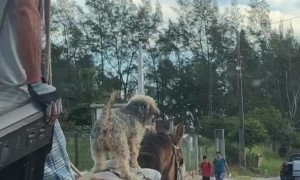 Dog Rides to Town on Horse Friend