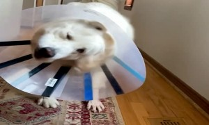 Satellite Dish Doggo Comes in for Landing
