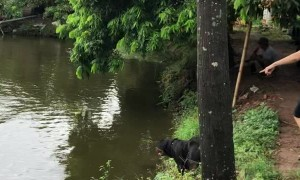 Dog Dives in to Save Person From Drowning