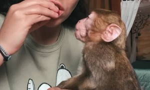 Having a Snack with a Rescued Baby Monkey