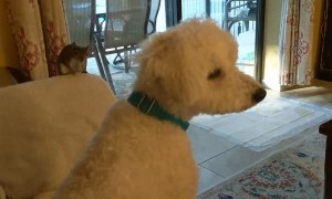 Adorable Relationship Between a Rescue Squirrel and Dog