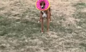 Doggy Zooms Around Yard With Favorite Donut Toy