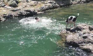 Guy Pretending to Drown Gets Help From His Dog