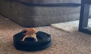 Bearded Dragon Rides Robot Vacuum Around House